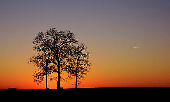 Trees At Sunset by Keith Bridgman