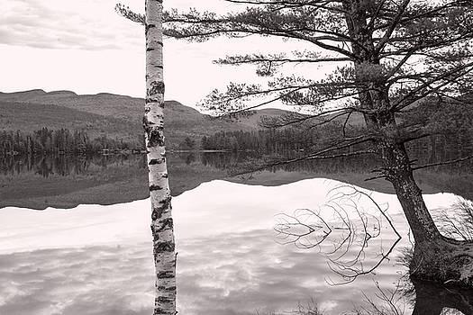 Trees at the Lake by Nancy De Flon
