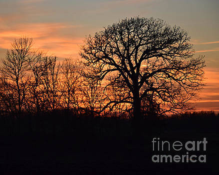 Trees At Twilight by Kathy M Krause