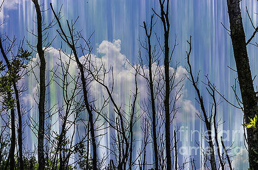 Trees blended background by Jeffery Johnson