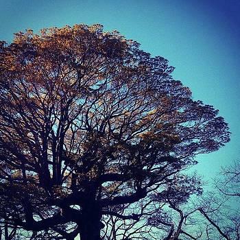 #樹 #trees by Bow Sanpo
