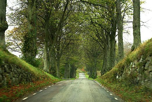 Trees by road by Sanjay Deva