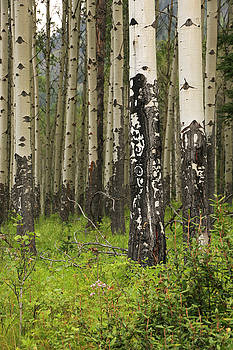 Trees by Catherine Alfidi