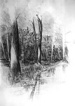 Trees by Dariusz Kronowski