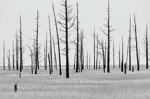 Louis Dallara - Trees Die off