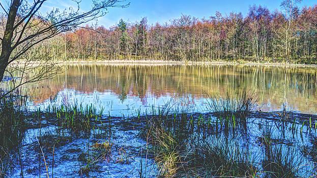 Jacek Wojnarowski - Trees from Forest of Dean reflecting in water