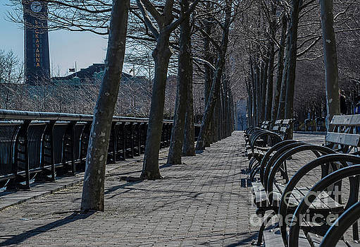 Trees Grew in Hoboken by Reynaldo Brigantty