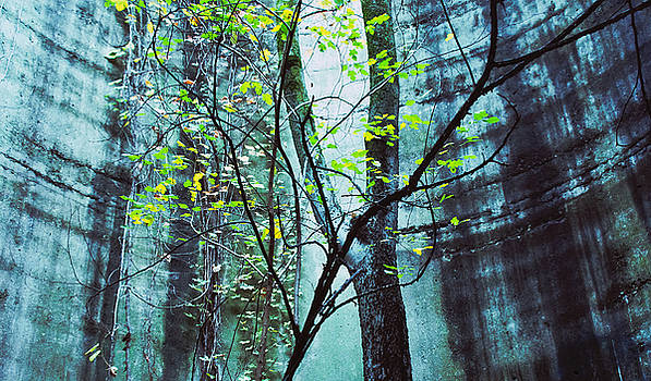 TONY GRIDER - Trees Growing in Silo - Blu-Green Filter Wide Edition