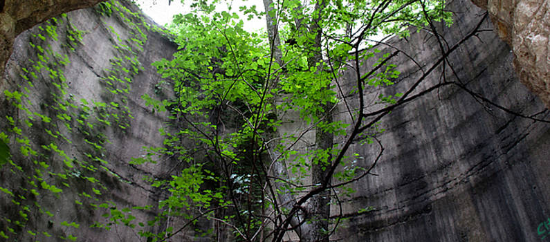 TONY GRIDER - Trees Growing in Silo - Panorama Edition