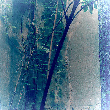 TONY GRIDER - Trees Growing in Silo Abstract- Square 2015 Edition