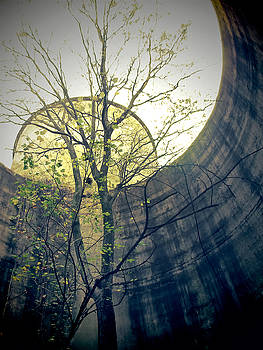 TONY GRIDER - Trees Growing in Silo - Yellow Blue Portrait Edition