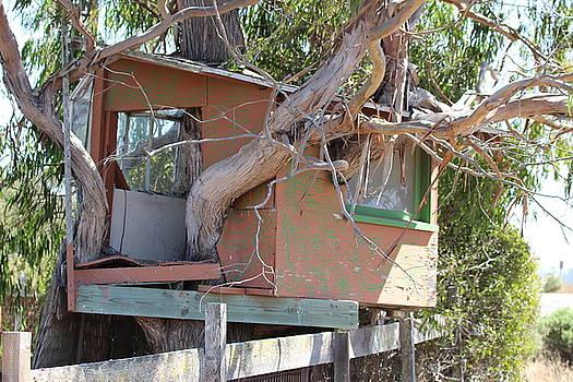Gary Canant - Trees House