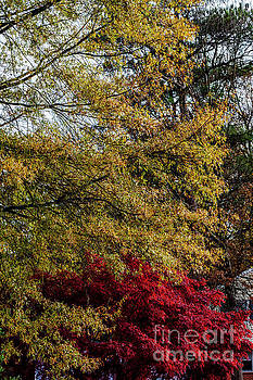 Doug Berry - Trees in Autumn at Chesterfield 0510VT