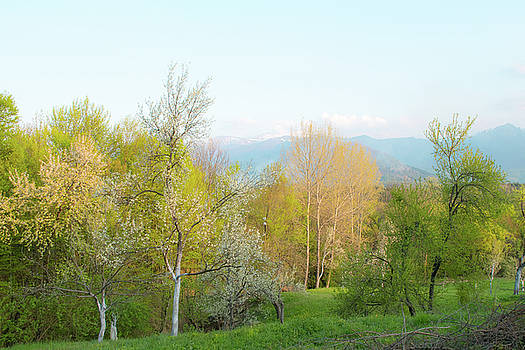 Trees in bloom at Aromahoney mountain retreat by Julien Van Dommelen