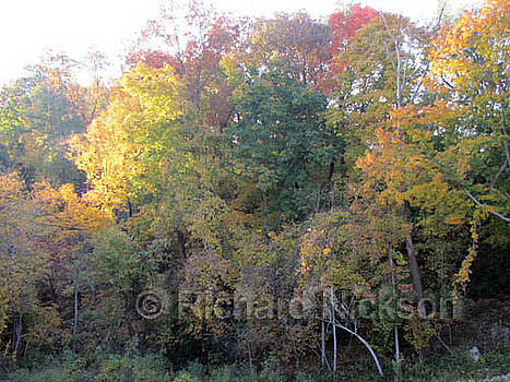 Trees in Fall Foliage by Richard Nickson