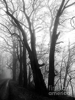 Trees in Fog by John Castell