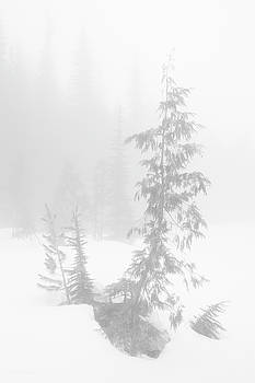 Tim Newton - Trees in Fog Monochrome