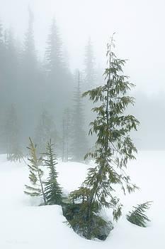 Trees in Fog by Tim Newton