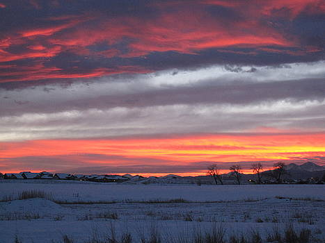 Trees In Fort Collins, Sunset by Tammy Sutherland