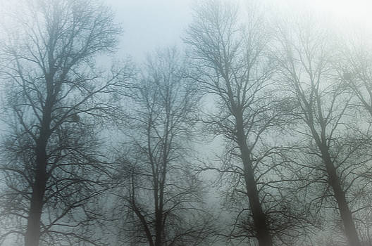Trees in Mist by Tetyana Kokhanets