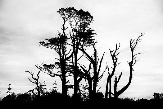 Trees in silhouette by Russ Dixon