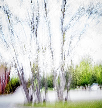Trees in spring shaken not stirred by Sharon Wilkinson