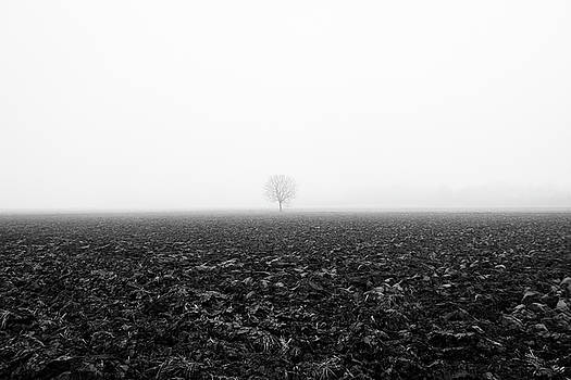 Trees in the fog 1 of 4 - Lombardy / Italy by Massimo Mazza