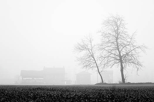 Trees in the fog 2 of 4 - Lombardy / Italy by Massimo Mazza
