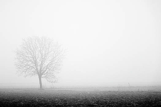 Trees in the fog 3 of 4 - Lombardy / Italy by Massimo Mazza