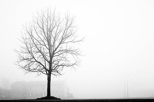 Trees in the fog 4 of 4 - Lombardy / Italy by Massimo Mazza
