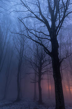 Trees in the fog by Massimo Discepoli