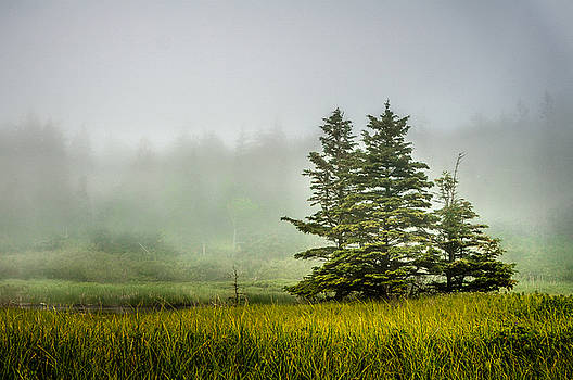 Trees in the fog by Prashant Thumma