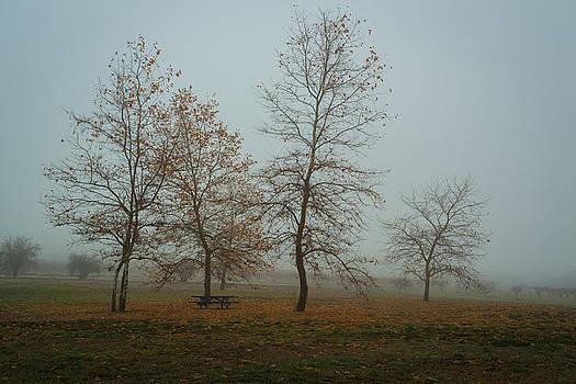 Rick Strobaugh - Trees in the Fog