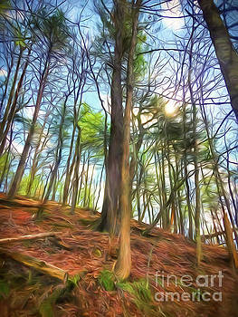 Trees In the Forest with February Sunshine by Kerri Farley