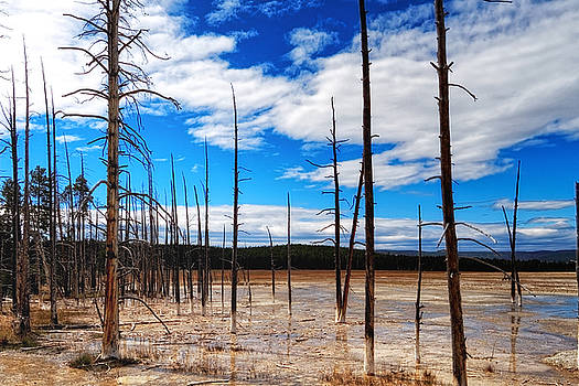 Trees in the Midway Geyser Basin by Lars Lentz
