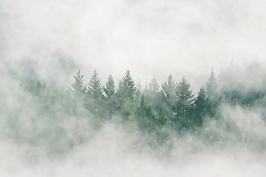 Trees in the mist by Darryl Luscombe