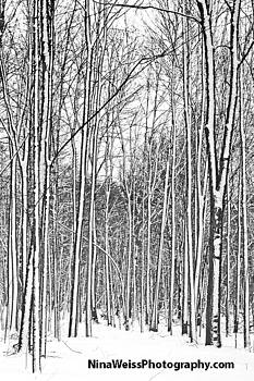 Trees in the Snow 2 - Best Landscape Photography Christmas Gift by Nina Weiss