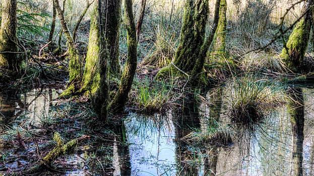 Jacek Wojnarowski - Trees in the water HDR