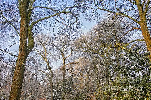 Patricia Hofmeester - Trees in the winter