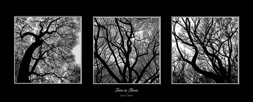 Trees in Threes by Diane C Nicholson