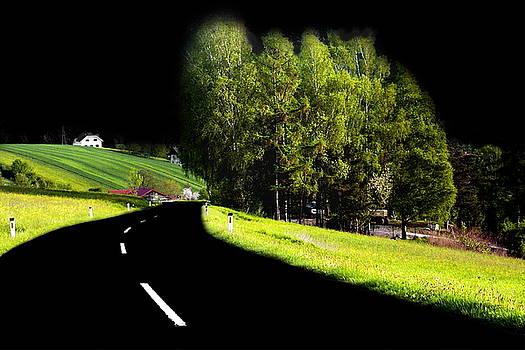 Trees In Upper Austria by Sascha Meyer
