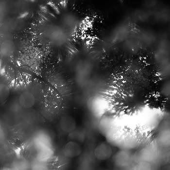 Trees In Water 072 by Noah Weiner