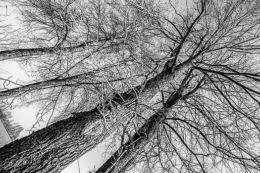 Trees in Winter by Fabio Belloni