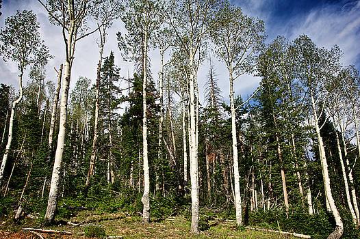 Trees  by John Daly