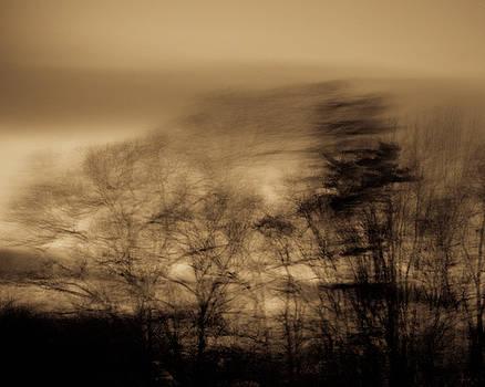 Trees by Ken Kartes