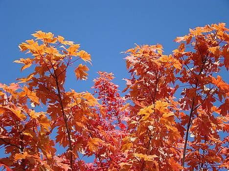 Baslee Troutman - Trees Landscape art print Fall Tree Leaves Baslee Troutman