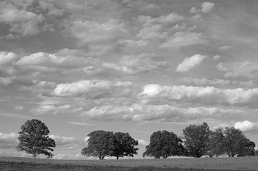 Trees Like Clouds by John Randolph