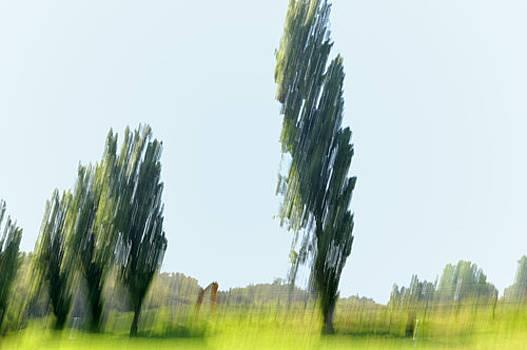 Trees by Luigi Inzeo