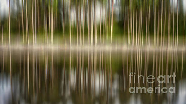 Trees meet Water by Jerry Fornarotto