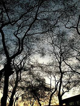 Trees by Natalia Radziejewska